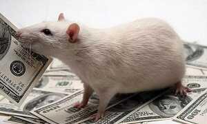 Жартівливий гороскоп на 2020 рік Пацюка: в віршах і прозі