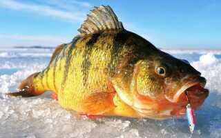 Зимова риболовля 2019-2020   відкриття сезону, по першому льоду
