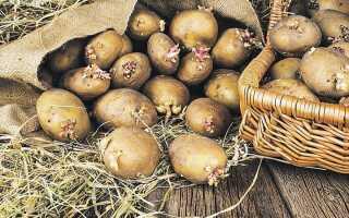 Посадка картоплі в 2020 році | коли садити, календар