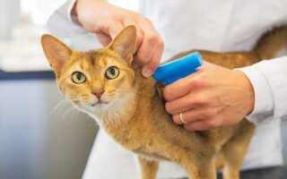 Податок на домашніх тварин в Росії в 2020 році: чи приймуть
