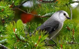 День птахів в 2019 році: якого числа