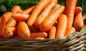 Посадка моркви в 2019 році | коли садити, календар
