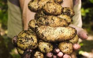 Посадка картоплі в 2019 році | коли садити, календар
