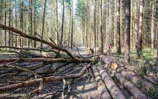 Збір хмизу в лісі з 2019 року | закон, дозволили збирати росіянам